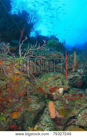 Coral Reef - Roatan, Honduras
