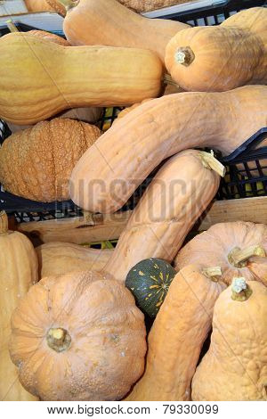 Bottle pumpkin