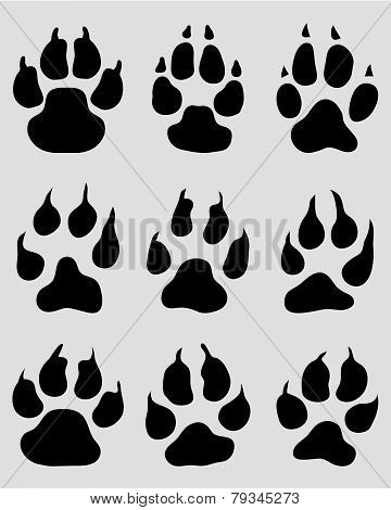print of paw