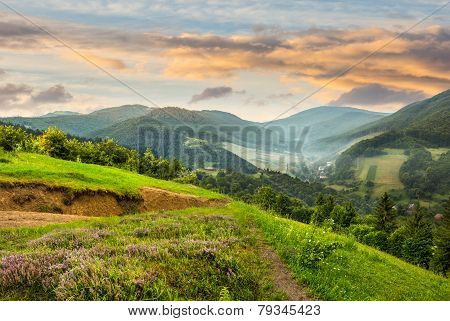 Flowers On Hillside Meadow With Forest In Morning Mountain