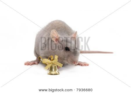 Gray rat with golden bell at white background poster