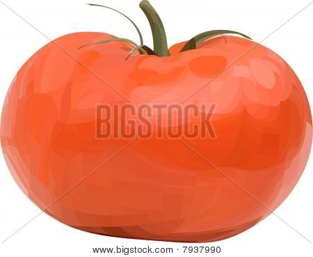 Vector tomato.