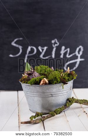 Moss And Bulb Flowers