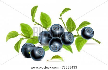 Blueberries with leaves. Vector illustration.