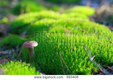 Sunny Mushroom