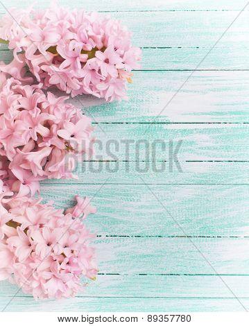 Background With Fresh Flowers Hyacinths