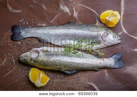 Two Rainbow Trouts