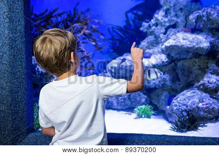 Young man pointing a stone in a tank at the aquarium