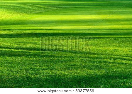 Light And Shadows On A Beautiful Lawn