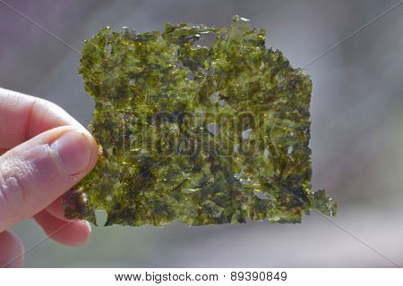 "Close up of a hand holding up a nutricious flat ""chip"" of edible seaweed poster"