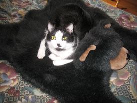 Cat On A Bear Rug