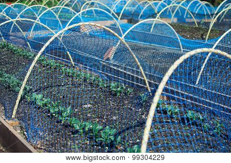 Fresh Plantings Under Bird Net