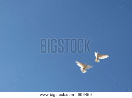 Two White Doves In The Blue Sky