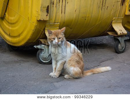 Stray Red Cat Sitting On A Dustbin