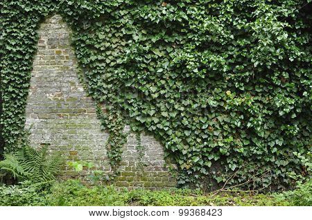 Ivy On A Brick Wall