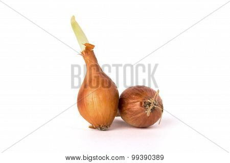 bulb onions on white background