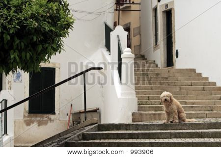 dog's portrait. picture taken in lizbon / portugal poster