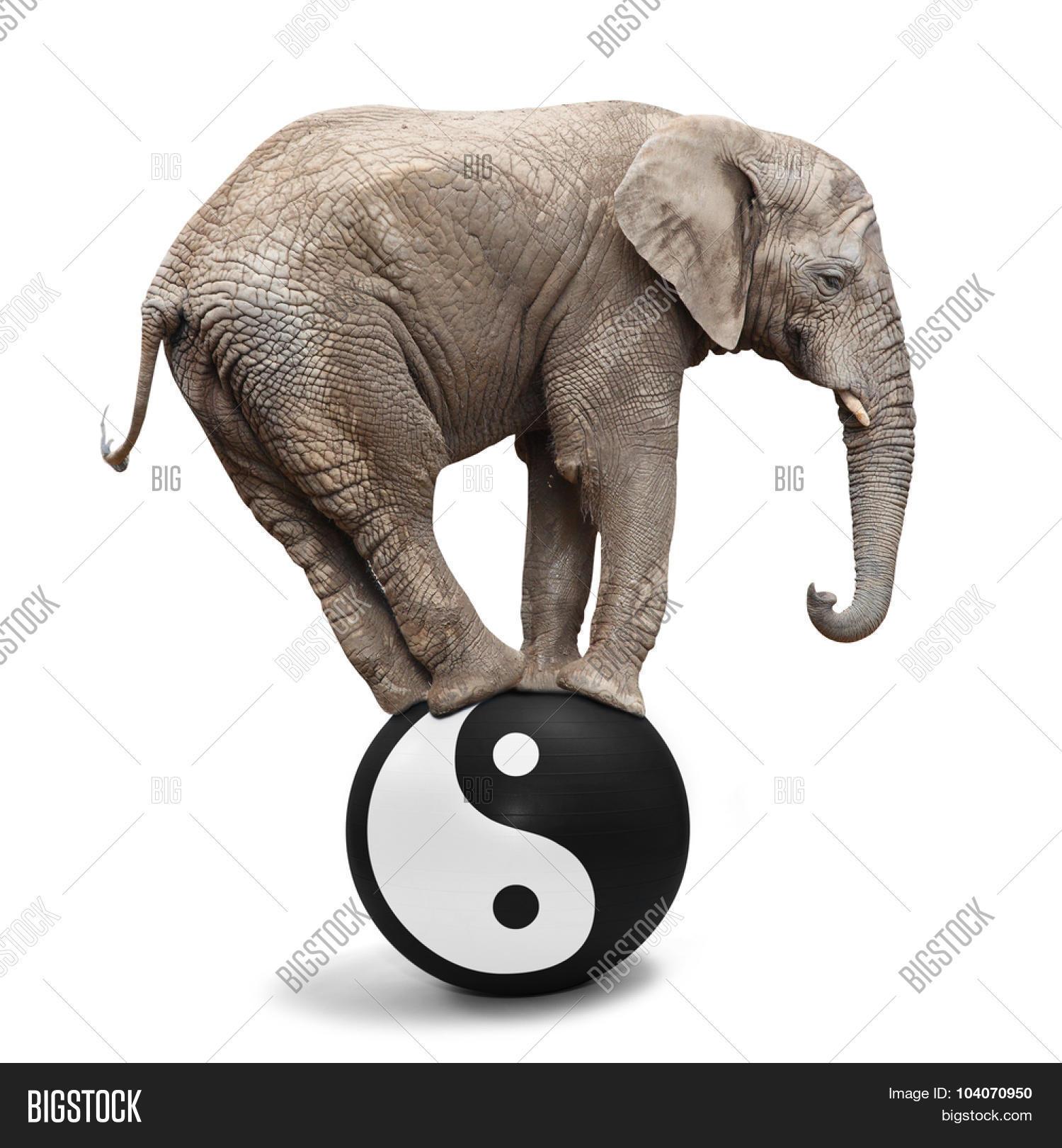 Big elephant balancing on sphere image photo bigstock big elephant balancing on a sphere with ying yang symbol of harmony and balance alternative buycottarizona Images