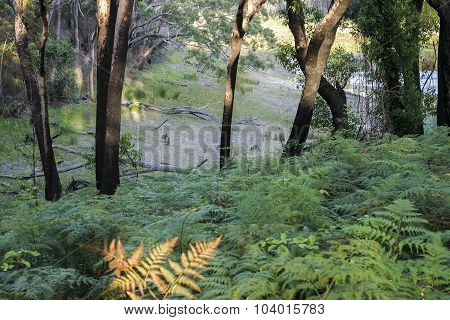 Bushwalking In Booderee National Park. Nsw. Australia