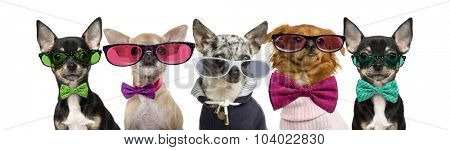 Group of Chihuahuas wearing bow ties and glasses in front of a white background