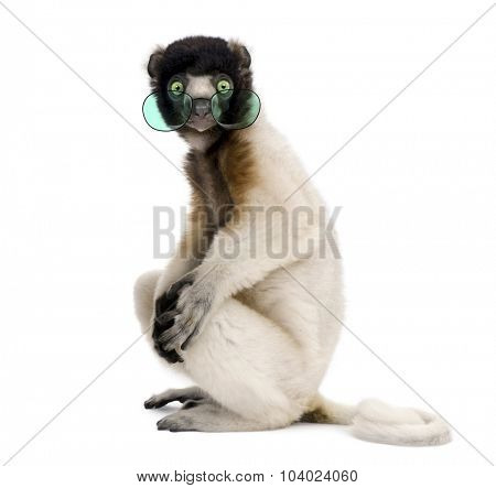 Portrait of Young Crowned Sifaka wearing glasses, Propithecus Coronatus, 1 year old, sitting against white background, studio shot