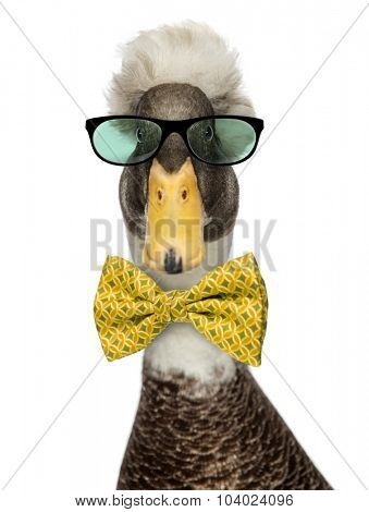 Close-up of a Male Crested Ducks wearing glasses and a bow tie isolated on white
