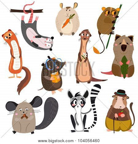 Vector Set Of Small Mammals In Cartoon Style.opossum, Hamster, Lemur,mole,gopher , Chinchilla, Ferre
