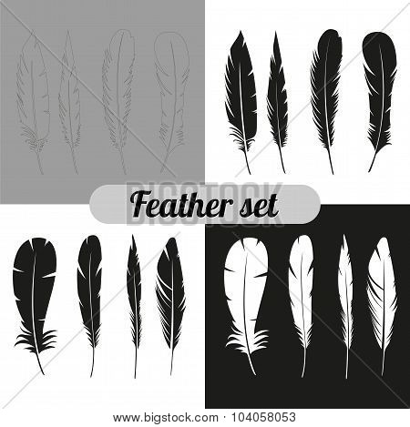 the collection of feathers