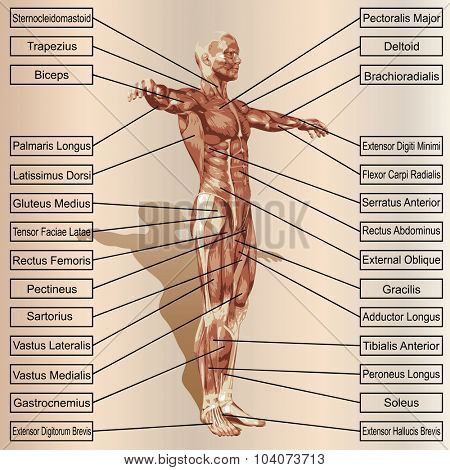 Concept or conceptual 3D male or human anatomy, a man with muscles and text on beige vintage background poster