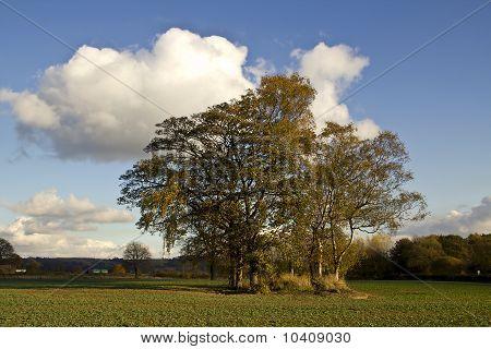 Autumn Trees In An Arable Field