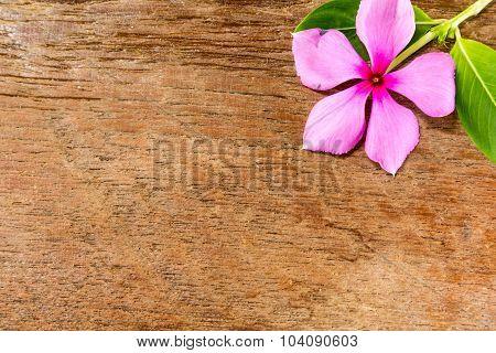 Vinca Flower On Wood Board Background
