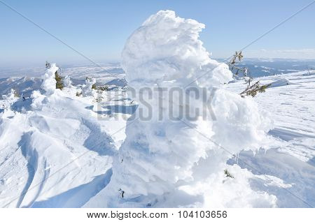 Evergreen Fir Tree Covered By Snow
