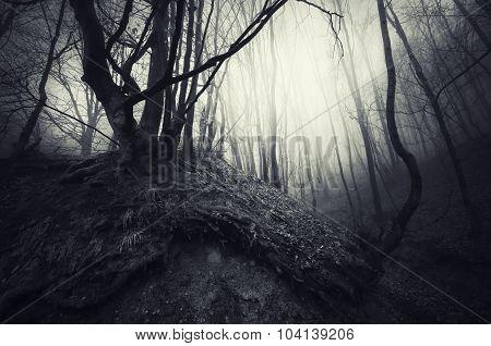 Dark Halloween forest