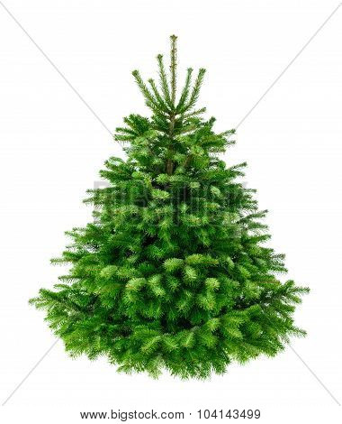 Perfect Lush Fir Tree On Pure White