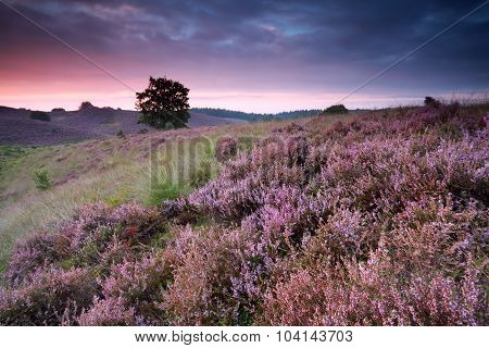 Beautiful Sunrise With Flowering Heather
