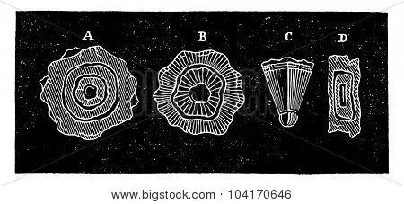 Cutting hailstones, vintage engraved illustration. Industrial encyclopedia E.-O. Lami - 1875.