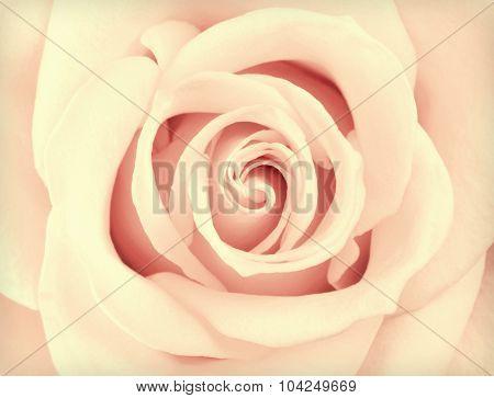 Macro Yellow Rose Flower Center Retro Vintage Style