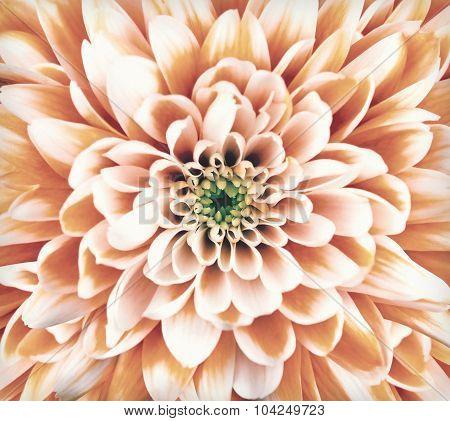 Macro Chrysanthemum Flower Center Vintage Retro