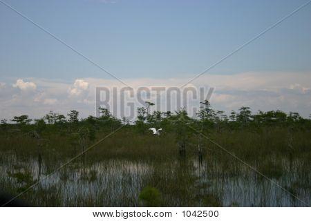 Everglades Scenic View
