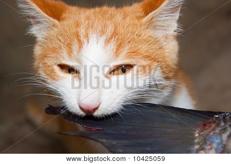 The Artful Cat Eats Fish
