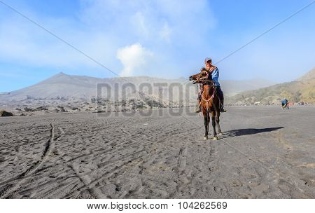 worker sitting horse