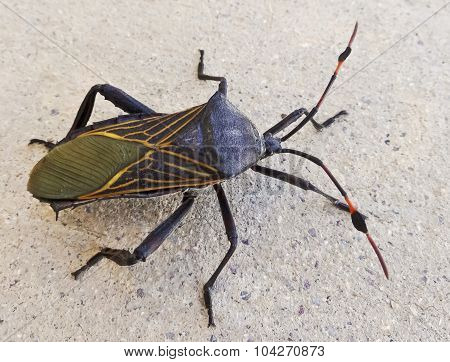 A Close Up View Of An Assassin Bug