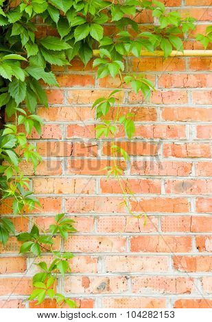 Brick Wall With Loach