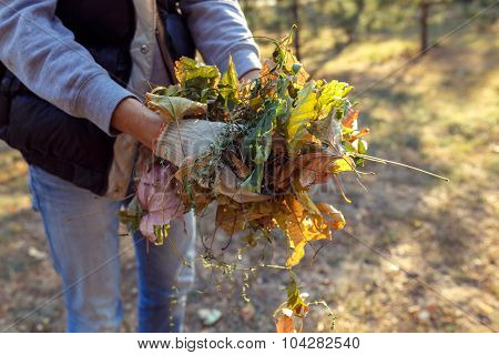 Young Boy Collects Fallen Leaves In Autumn