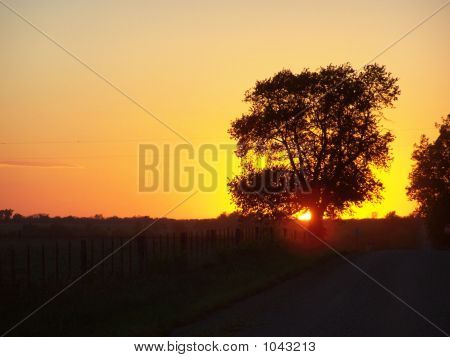 Golden Country Sunset