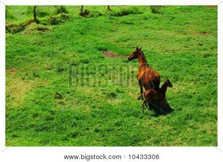 Horse of Waimea