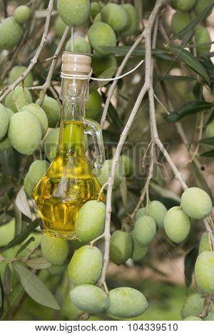Oil Bottle On An Olive Tree