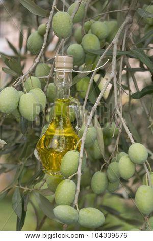 Oil Cruet On An Olive Tree