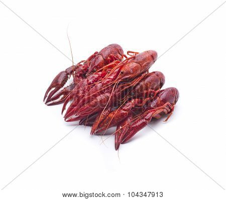 small red crayfish typical in some rivers of Spain