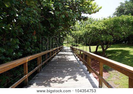 Scenic Wooden Walkway